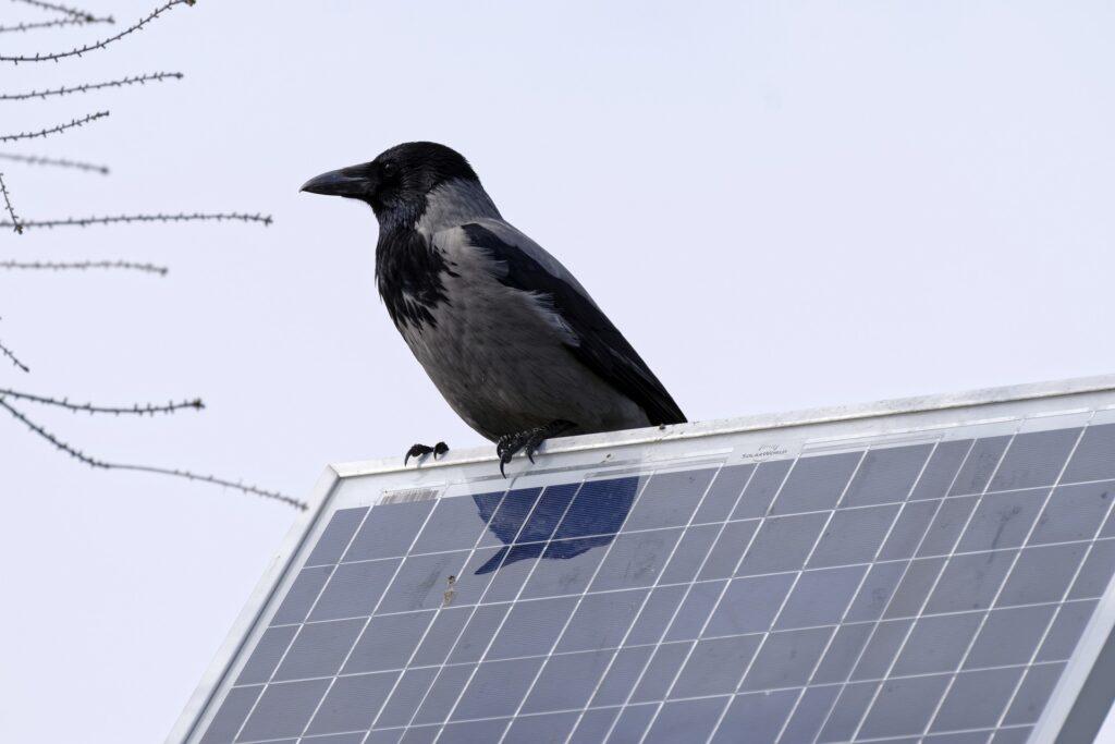 solar panel rook